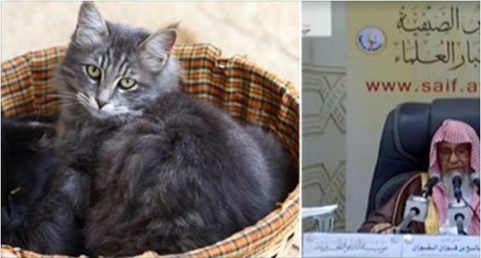 Fatwa délirante Fawzan al Fawzan: «il est haram de prendre en photo des chats…»
