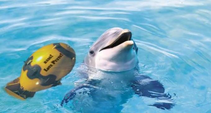 Israël a formé des dauphins contre le Hezbollah et du Hamas !!!