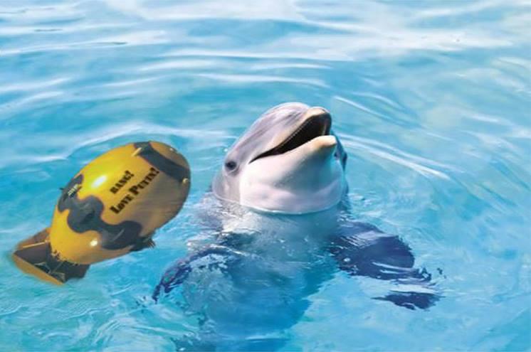 Israël a formé des dauphins contre le Hezbollah et du Hamas !!!1