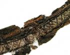 Les mots «Allah» et «Imam Ali» retrouvés sur un vêtement viking du IXe siècle
