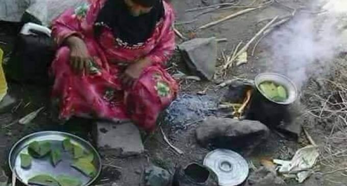 L'IMAGE DU JOUR : Cette femme yéménite et sa famille mangent des feuilles d'arbre comme repas quotidien pour survivre.