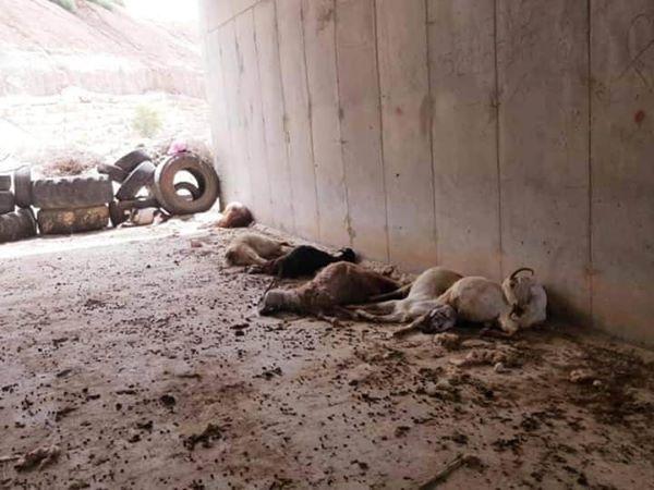 de plus de 60 moutons aujourd'hui