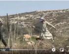 Regardez | Un vieil homme palestinien affronte les forces d'occupation israéliennes lors des affrontements dans le village de Deir Jarir en Cisjordanie occupée